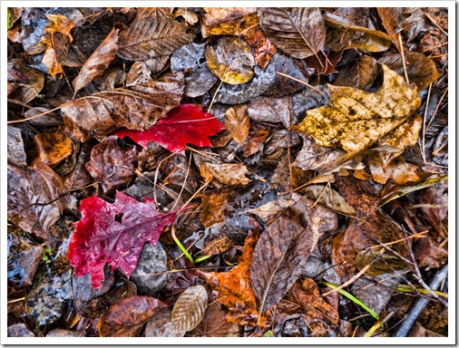 wet leaves-29-Edit